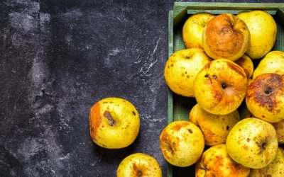 Food waste: How new tech is tackling a global problem